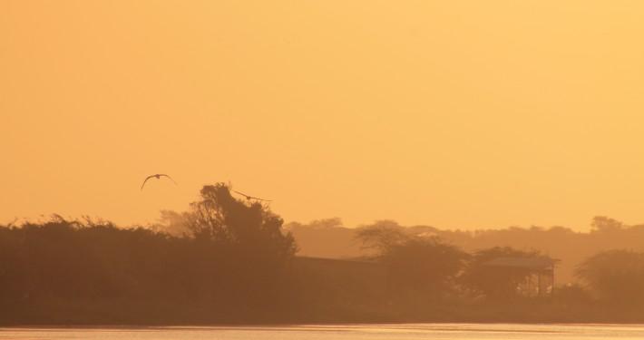 oiseau soleil couchant