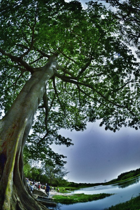 arbre vallée